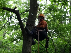 activity_tree_climbing_001