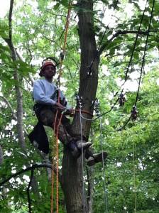 activity_tree_climbing_002